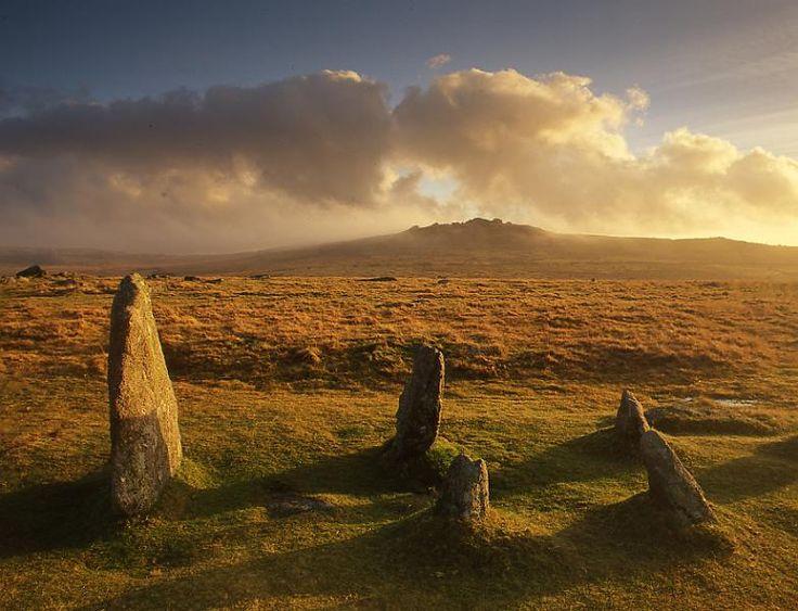 Dartmoor þyrnigróður