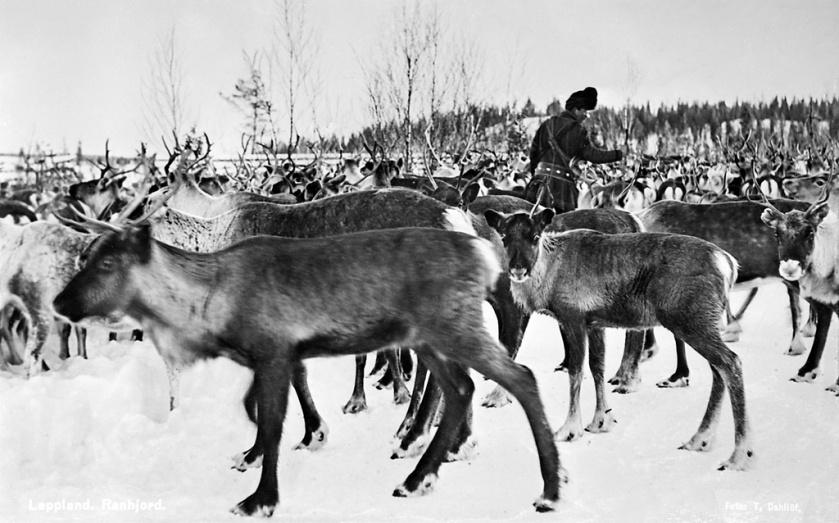 Norrbotten, Kiruna, Jukkasjärvi, Lappland, Övrigt-Djur, Miljöer-Fjällmiljö